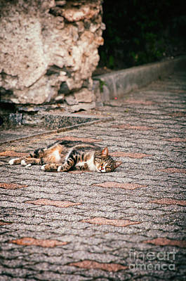 Print featuring the photograph Lazy Cat    by Silvia Ganora