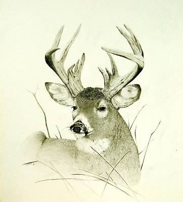 Whitetail Deer Drawing - Lazy Day by Stan White