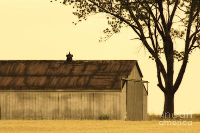 Photograph - Lazy Days Barn  by Cathy  Beharriell