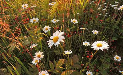Photograph - Lazy Days Daisies by Karen Horn
