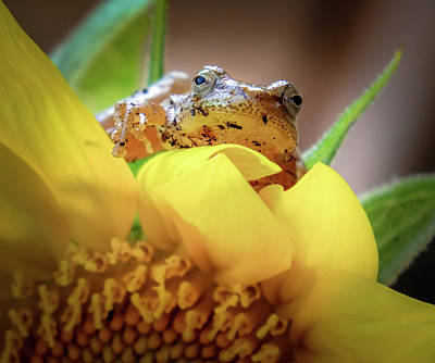 Spring Peepers Photograph - Lazy Days by Karen Wiles