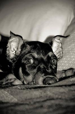 Doberman Photograph - Lazy Days by Melissa  Riggs