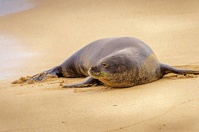 Photograph - Lazy Gaze From The Shore by Daniel Murphy