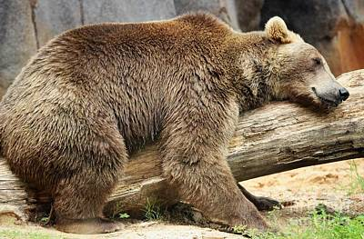Photograph - Lazy Old Bear by Paulette Thomas