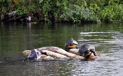 Photograph - Lazy River Ride by Donna Proctor