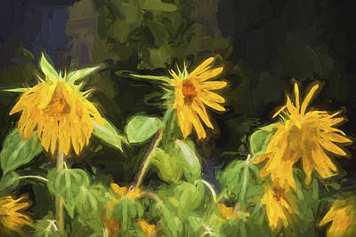 Photograph - Lazy Sunflowers Helianthus Painted by Rich Franco
