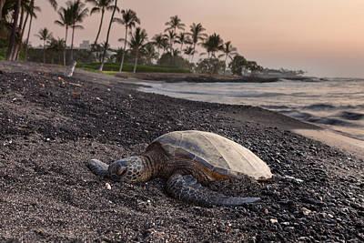 Beach Landscape Photograph - Lazy Turtle by Thorsten Scheuermann
