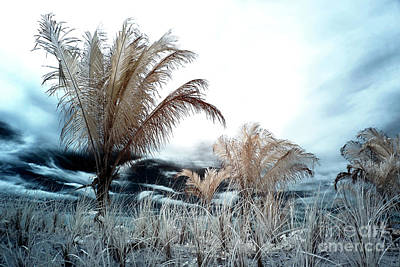 Photograph - Lbi Infrared Palms by John Rizzuto