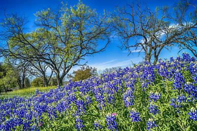 Austin Photograph - Lbj Bluebonnets by Craig David Morrison