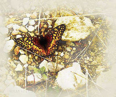 Photograph - Lbj Butterfly by Susan Vineyard