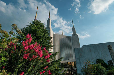 Photograph - Lds From The Flowers by Brian Green