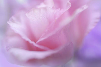 Photograph - Le Baiser Rose by Jenny Rainbow
