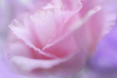 Photograph - Le Baiser Rose by Jenny Rainbow