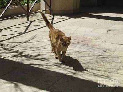 Photograph - Le Chat Des Paroisses by Donna L Munro