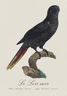 Parrots Painting - Le Lori Noir / Black Lory - Restored 19th Century Lory Illustration By Jacques Barraband by Jose Elias - Sofia Pereira