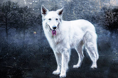 Swiss Photograph - Le Loup Blanc by Joachim G Pinkawa