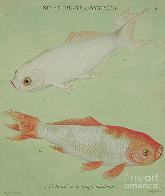 Goldfish Wall Art - Painting - Le Nacre, Le Rougi Membres by Chinese School