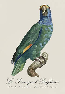Fauna Painting - Le Perroquet Dufrene - Restored 19th Century Parrot Illustration By Jacques Barraband by Jose Elias - Sofia Pereira