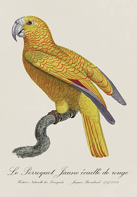 Fauna Painting - Le Perroquet Jaune Ecaille De Rouge - Restored 19th Century Parrot Illustration By Jacques Barraband by Jose Elias - Sofia Pereira