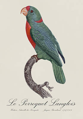 Langlois Painting - Le Perroquet Langlois - Restored 19th Century Parrot Illustration By Jacques Barraband  by Jose Elias - Sofia Pereira