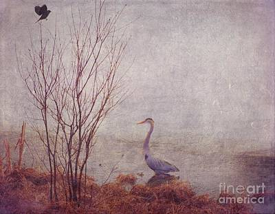 Print featuring the photograph Le Retour De Mon Heron by Aimelle