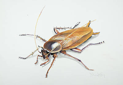 Cockroach Painting - Le Roach by Jennifer Lindsley