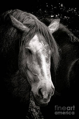 Photograph - Le Vieux Percheron  by Olivier Le Queinec