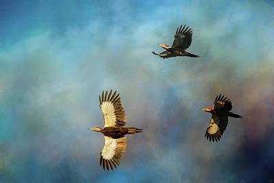Photograph - Lead With Light Pileated Woodpecker Art By Jai Johnson by Jai Johnson