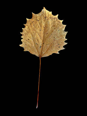 Photograph - Leaf 14 by David J Bookbinder