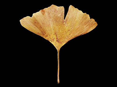 Photograph - Leaf 18 by David J Bookbinder