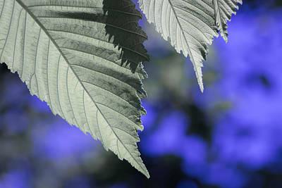 Photograph - Leaf Variation 2 Of 3 by James Barber