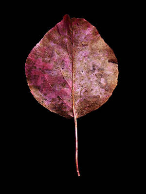 Photograph - Leaf 20 by David J Bookbinder