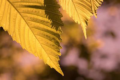 Photograph - Leaf Variation 3 Of 3 by James Barber