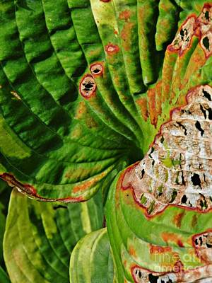 Photograph - Leaf Abstract 10 by Sarah Loft
