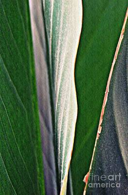 Photograph - Leaf Abstract 13 by Sarah Loft
