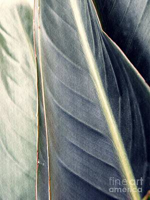 Photograph - Leaf Abstract 14 by Sarah Loft