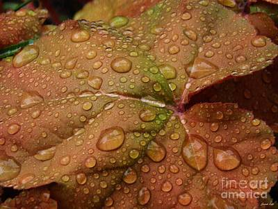 Photograph - Leaf Abstract 17  by Sarah Loft