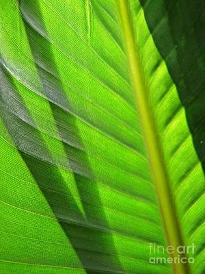 Photograph - Leaf Abstract 18 by Sarah Loft
