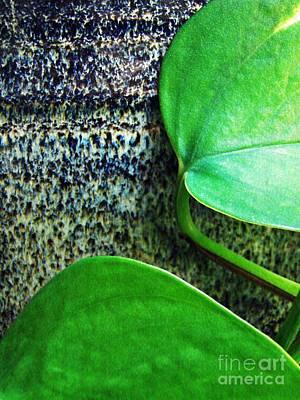 Photograph - Leaf Abstract 21 by Sarah Loft