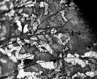 Photograph - Leaf Abstract 5 Bw by Mary Bedy