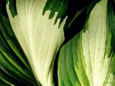 Photograph - Leaf Abstract 6 by Sarah Loft