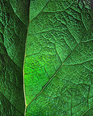 Photograph - Leaf Abstract by Art Shimamura