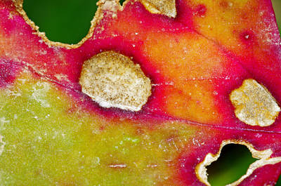 Photograph - Leaf Abstract by Bill Jordan