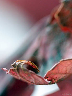 Photograph - Leaf Abstract I by Lauren Radke