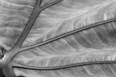 Photograph - Leaf Abstraction by Jeffrey PERKINS