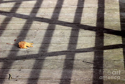Photograph - Leaf Alone by Karen Adams