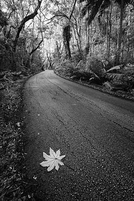 Photograph - Leaf Along The Way by Andre Donawa