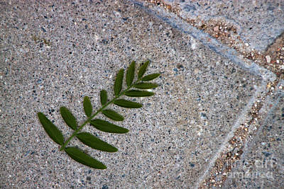 Photograph - Leaf by Ana Mireles