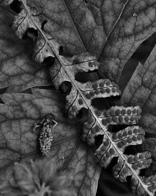 Photograph - Leaf And Cone In The Forest by Charles Lucas