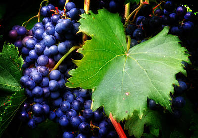 Leaf And Grapes Art Print by Greg Mimbs